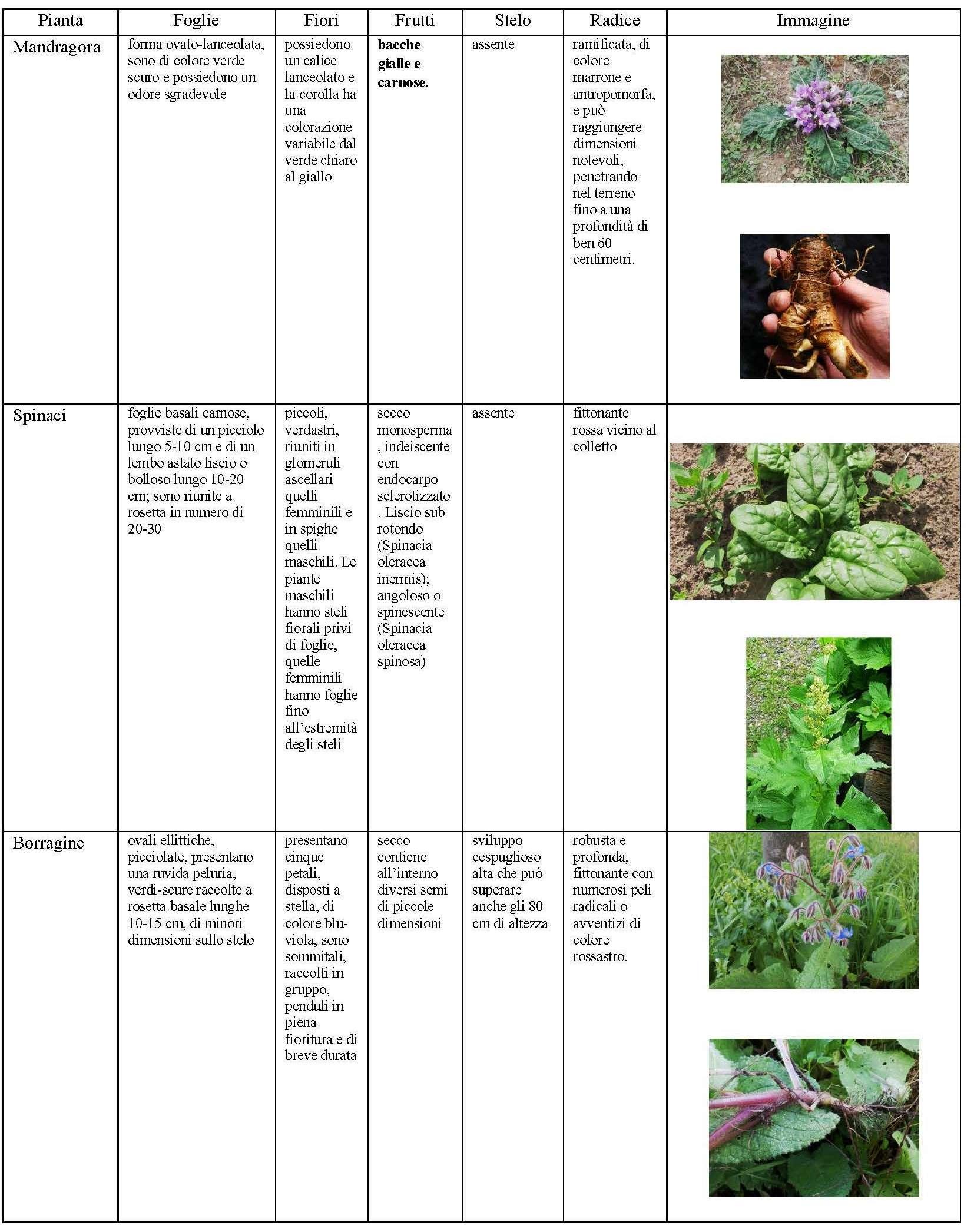 Fiori E Piante Commestibili nutrirsi con erbe selvatiche: cosa può accadere a chi non le