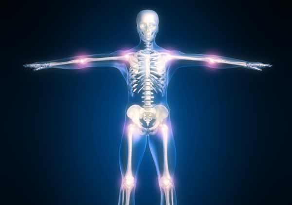 Le ossa, lo scheletro e le articolazioni sono il nostro sostegno