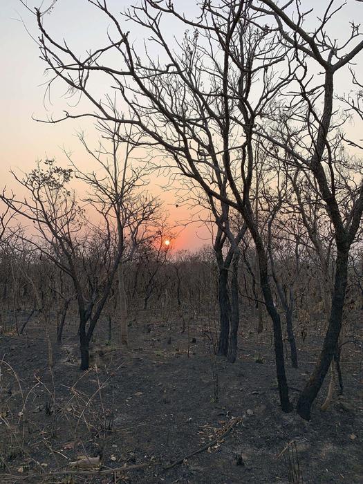 L'Amazzonia brucia, scontro tra Macron e Bolsonaro