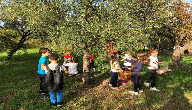 """""""Storia dell'ulivo"""" dalla raccolta alla conservazione delle olive"""