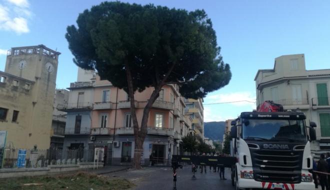 Il pino della discordia di piazza San Sebastiano a Barcellona