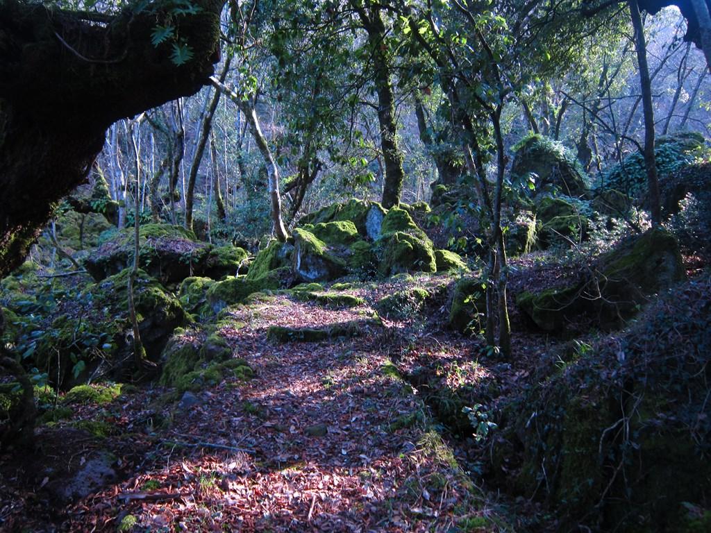 Il bosco di Biancaneve esiste davvero? Sì, è il Bosco di Sasseto (VT)!