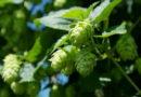 Birra 100% siciliana